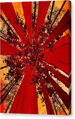 Diana Van - Abstract Landscape Art Sequoia Trees Canvas Print by Diana Van
