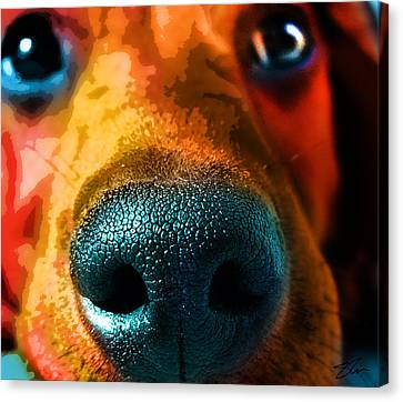Nosy Canvas Print by Shevon Johnson