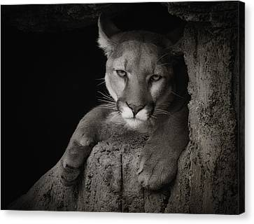 Not A Happy Cat Canvas Print by Elaine Malott