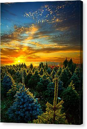 Autumn Leaf Canvas Print - Not Forgotten by Phil Koch