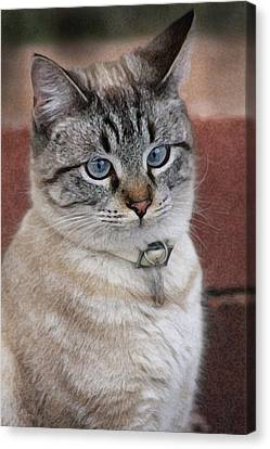 Not Impressed  Canvas Print by Kim Henderson