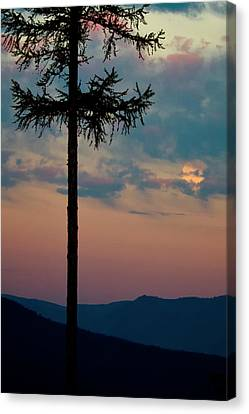 Not Quite Clearcut Canvas Print by Albert Seger