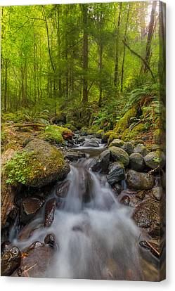 Not-so-dry Creek Canvas Print by David Gn