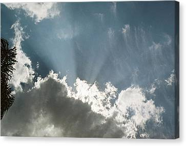 Not So Hidden Canvas Print by LDPhotography Stephanie Armstrong