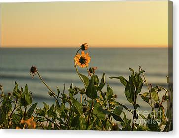 Canvas Print featuring the photograph Nothing Gold Can Stay by Ana V Ramirez