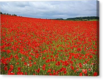 Nottinghamshire Poppy Field Canvas Print by David Birchall