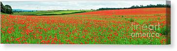 Nottinghamshire Poppy Field Panorama Canvas Print by David Birchall