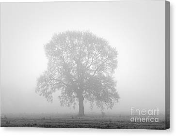 November Oak Canvas Print by Richard Thomas