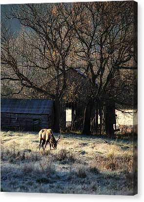 Canvas Print featuring the photograph November Sunrise by Michael Dougherty