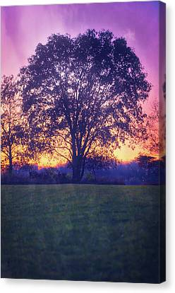 November Sunset And Lone Tree At Retzer Nature Center Canvas Print by Jennifer Rondinelli Reilly - Fine Art Photography