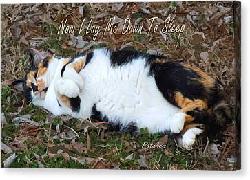 Feline Canvas Print - Now I Lay Me Down To Sleep by Garland Johnson