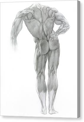 Canvas Print featuring the drawing Nude 2 by Valeriy Mavlo
