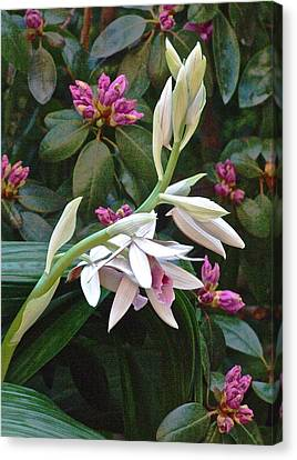 Nun Orchid Canvas Print