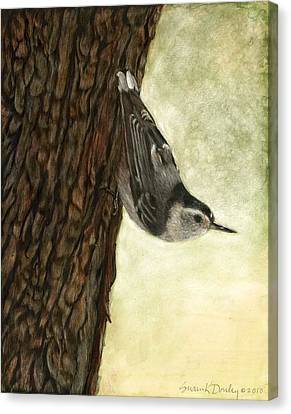 Nuthatch Acrobat Canvas Print by Susan Donley