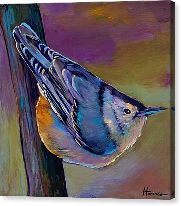 Nuthatch Canvas Print by Johnathan Harris