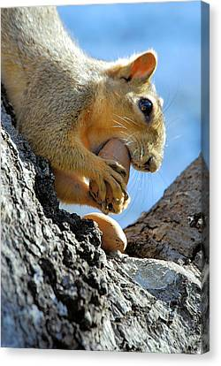 Canvas Print featuring the photograph Nutjob by Debbie Karnes