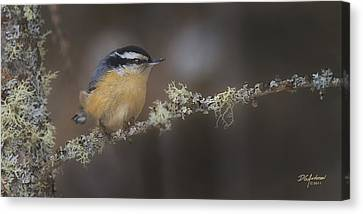 Nuts About Nuthatches Canvas Print