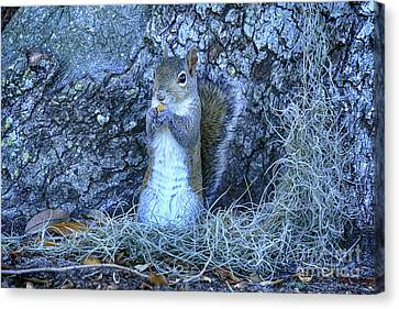 Canvas Print featuring the photograph Nuts Anyone by Deborah Benoit