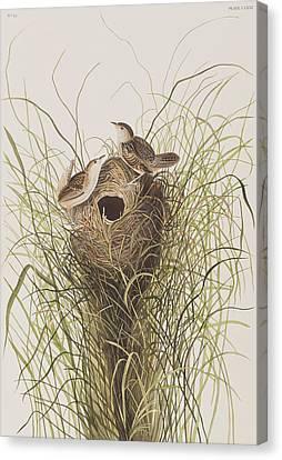 Wren Canvas Print - Nuttall's Lesser-marsh Wren  by John James Audubon