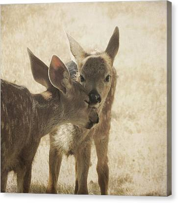Canvas Print featuring the photograph Nuzzle by Sally Banfill