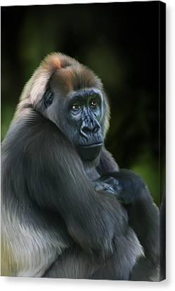 Ape Canvas Print - Nyango by Julie L Hoddinott
