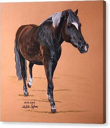 Nyx Canvas Print by Melita Safran
