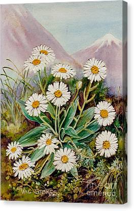 Nz Mountain Daisy Canvas Print by Val Stokes