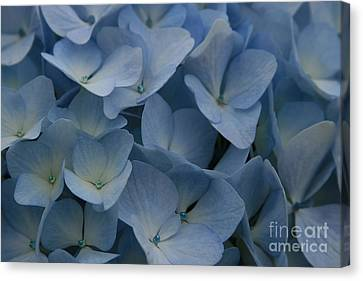 O Sapphire Heaven Soft And Low  Canvas Print by Sharon Mau