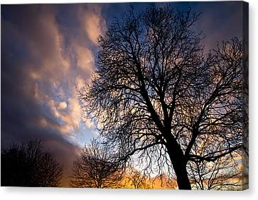 Oak Against The Sky Canvas Print by Justin Albrecht