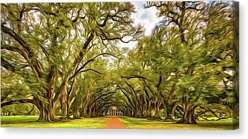 Oak Alley 6 - Paint Canvas Print