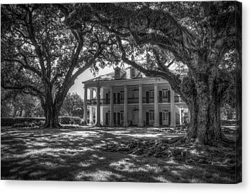 Oak Alley Plantation-bw Canvas Print by Tom Weisbrook