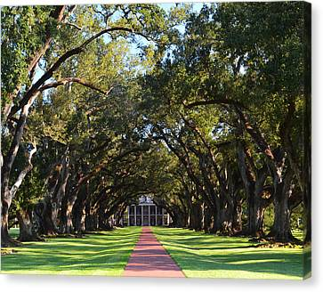 Oak Alley Plantation Canvas Print by Maggy Marsh