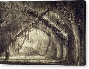 Plantation Canvas Print - Oak Avenue by Magda Bognar