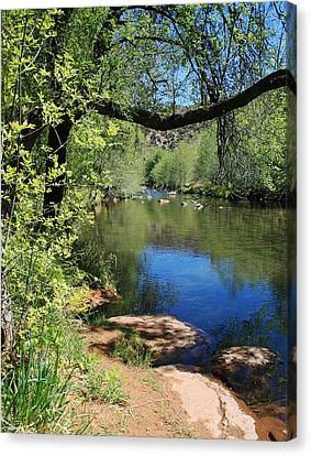 Oak Creek Canvas Print by Ellen Henneke