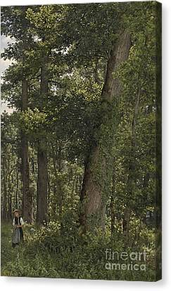 Oak Forest Canvas Print by Celestial Images