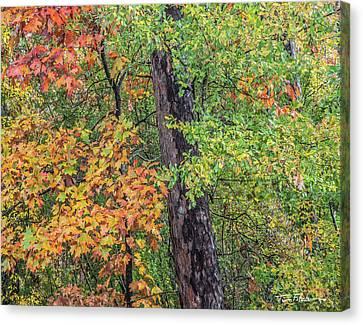 Oak Hickory Woodland Canvas Print by Tim Fitzharris