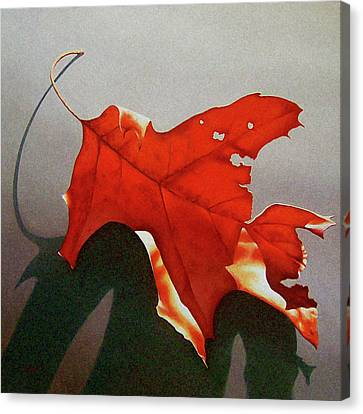 Realistic Canvas Print - Oak Leaf 1 by Timothy Jones