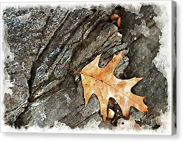 Oak Leaf On The Rocks Canvas Print by Peter J Sucy