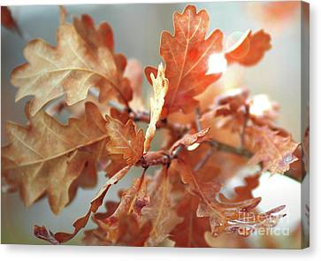 Oak Leaves In Autumn Canvas Print by Wilhelm Hufnagl