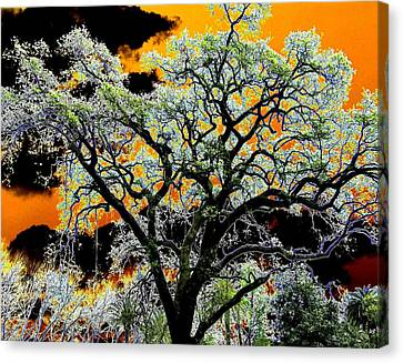 Oak Oasis Canvas Print by Will Borden