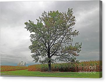 Oak On The Edge Canvas Print by Steve Gass