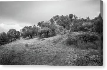 Canvas Print featuring the photograph Oak Savannah by Alexander Kunz