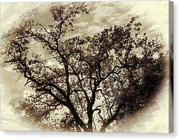 Canvas Print featuring the photograph Oak Tree by Athala Carole Bruckner