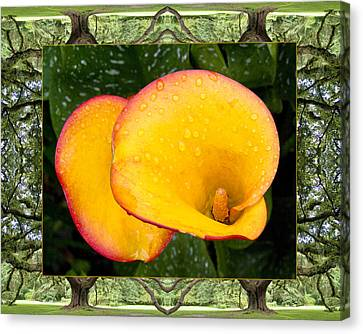 Oak Tree Cala Canvas Print by Bell And Todd