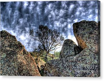 Canvas Print featuring the photograph Oak Tree by Jim and Emily Bush