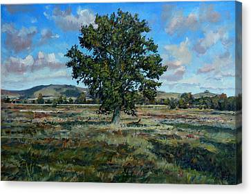 Oak Tree In The Vale Of Pewsey Canvas Print by Andrew Taylor