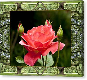 Oak Tree Rose Canvas Print by Bell And Todd