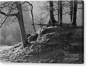 Oak Trees In Monochrome Canvas Print by Tony Higginson