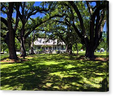 Canvas Print featuring the photograph Oakland Plantation One by Ken Frischkorn