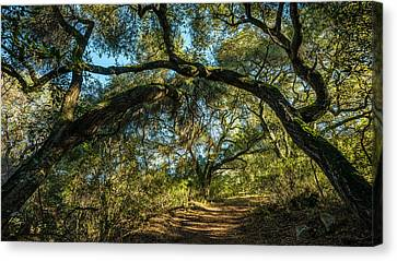 Canvas Print featuring the photograph Oaks Arching Over Trail At Daley Ranch by Alexander Kunz
